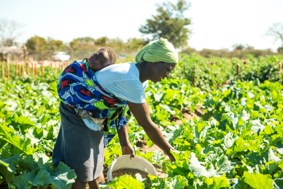 Community vegetable garden in Zimbabwe
